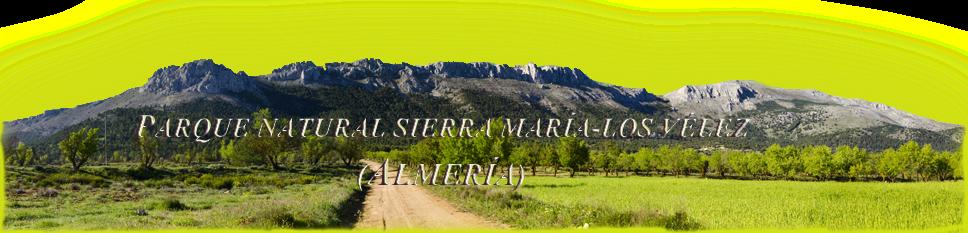 Sierra de María-Los Vélez