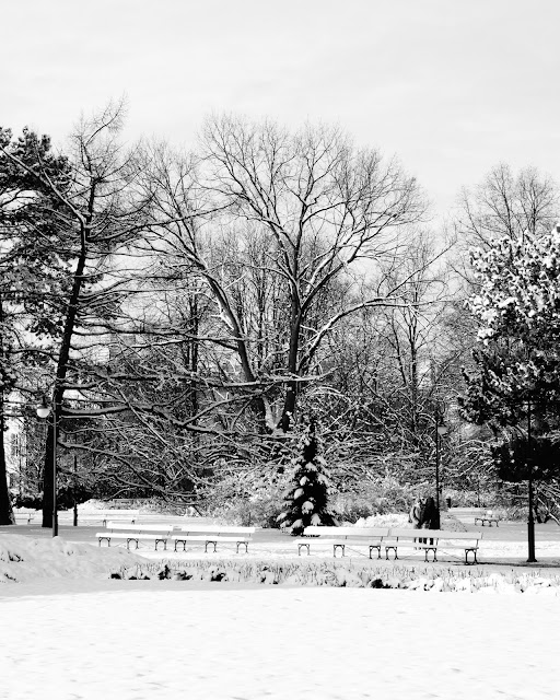 Park Ujazdowski, Warszawa. Fotografia krajobrazu. fot. Łukasz Cyrus