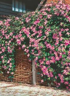 Montana Rubens, roz