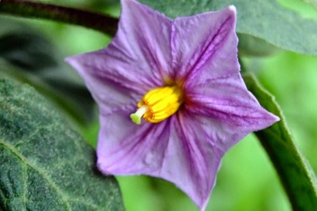 Munawi Inside Kelamin Bunga