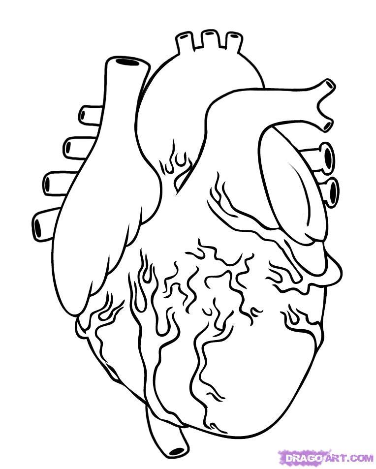 heart diagram kids coloring page  wanocolorhd