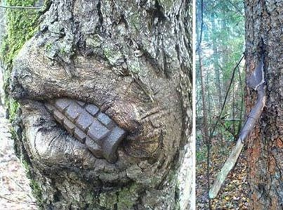 Giant trees eating all thing around | horrible picture