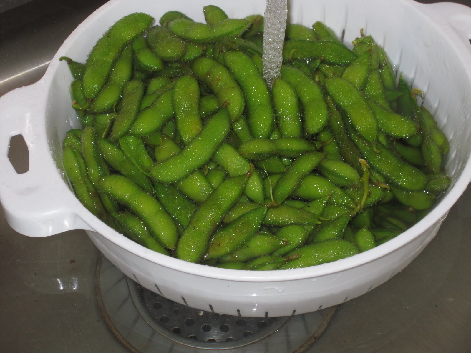 Marisa Makes: Grow Your Own Edamame
