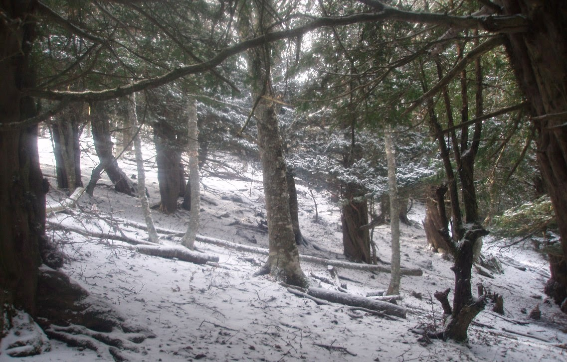 Vista-panorámica-nevada-de-los-tejos-de-la-Tejeda-de-Tosande
