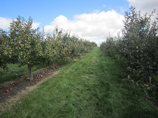 apple picking, apple farm, pick-your-own apples