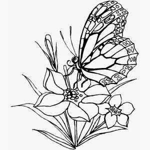 Mewarnai gambar bunga dan kupu-kupu untuk anak 9
