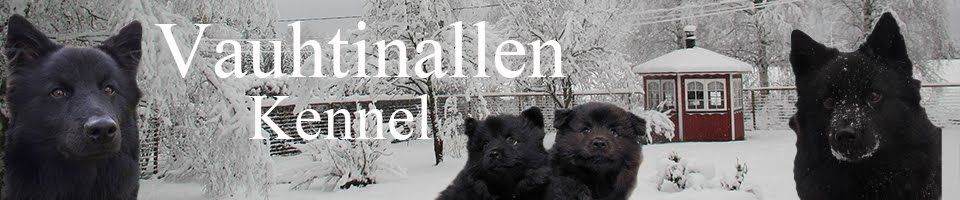 Vauhtinallen kennel