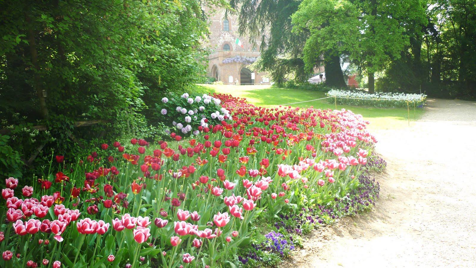 Il giardino sfumato il castello dei tulipani for Arbusti fioriti da giardino