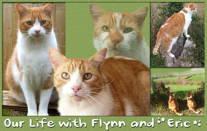 Eric and Flynn's Adventures