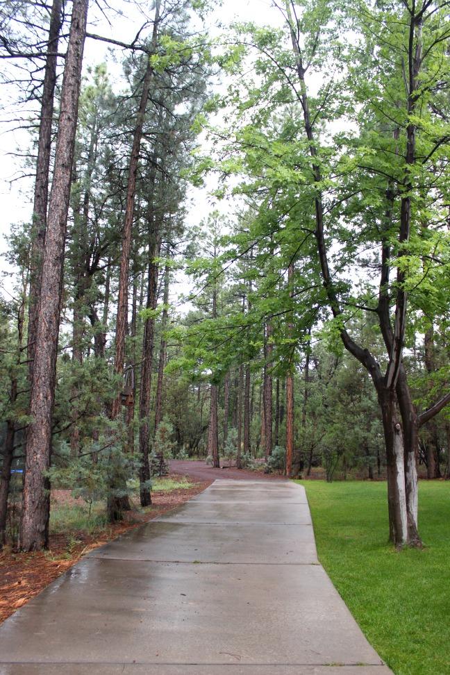 Arizona Pine trees
