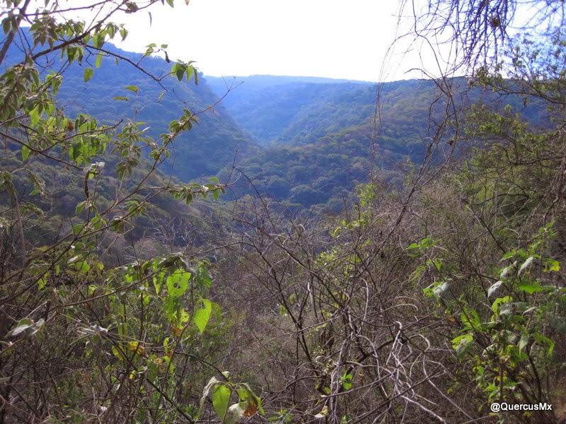 Barranca del arroyo El Monte en Cerro Viejo