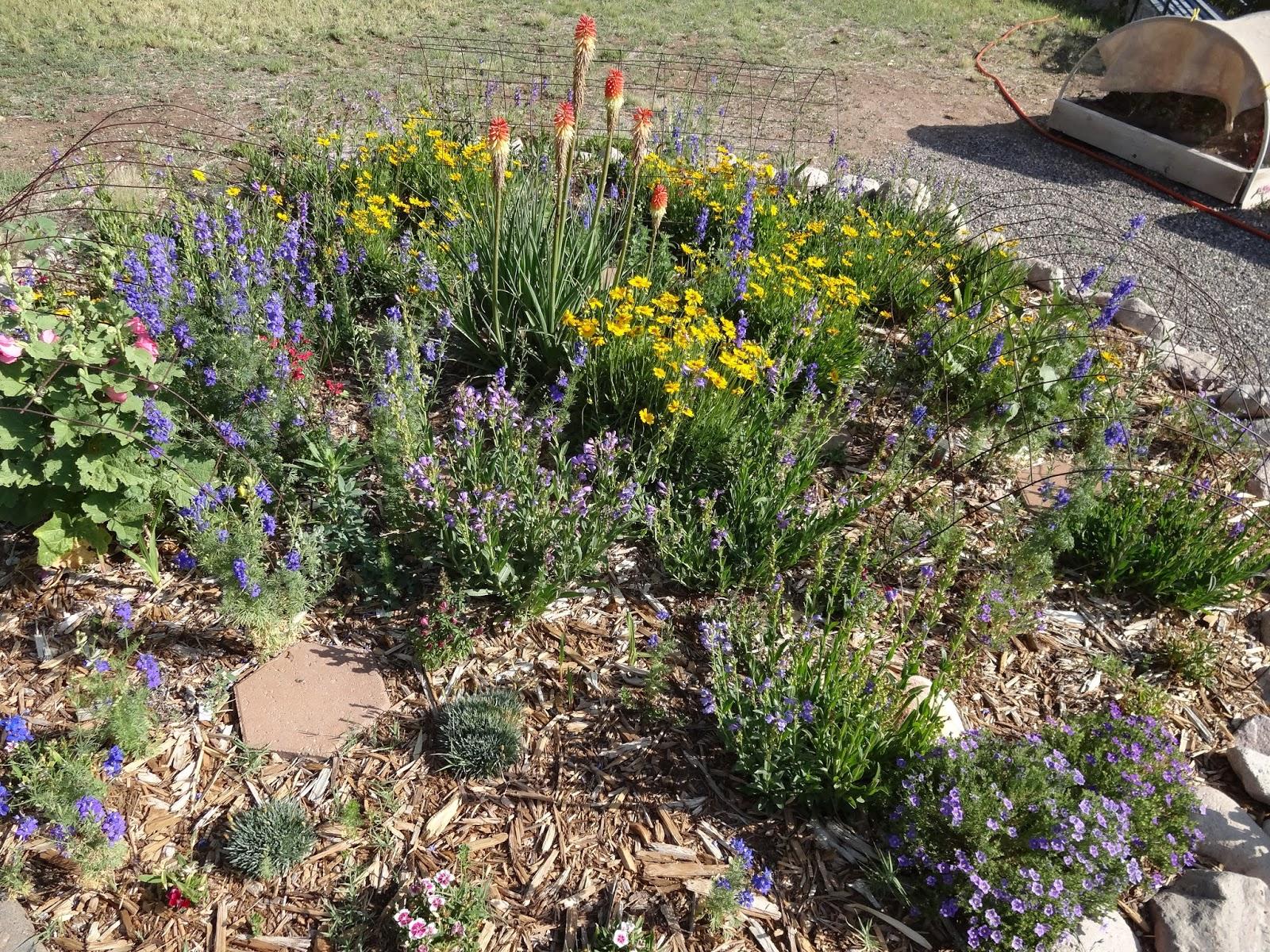 Top 28 new mexico gardening the scientific gardener a for Garden getaway designs