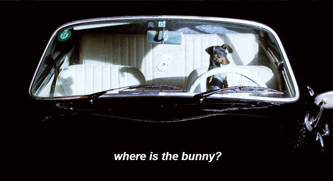 Where is the BUNNY!