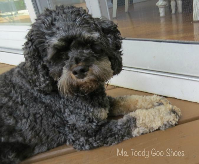 September Photo Diary - Ms. Toody Goo Shoes
