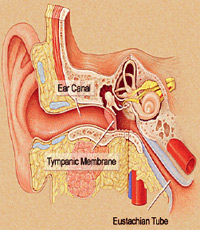 Causes For Tinnitus To Get Worse Treatment For Tinnitus