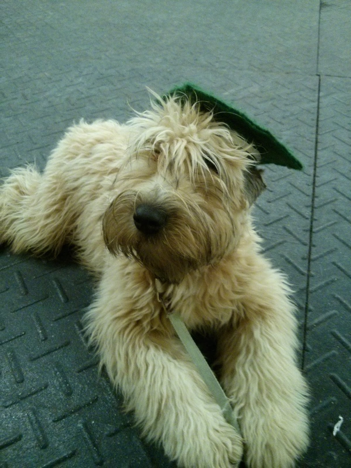 5 Month Old Graduating Puppy Obence