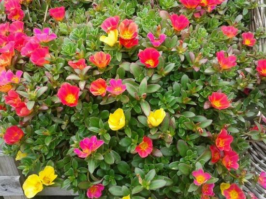 plantas de jardim resistentes ao solUm jardim para cuidar Para um