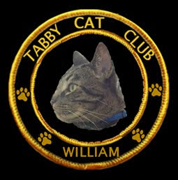 Tabby Cat Club!