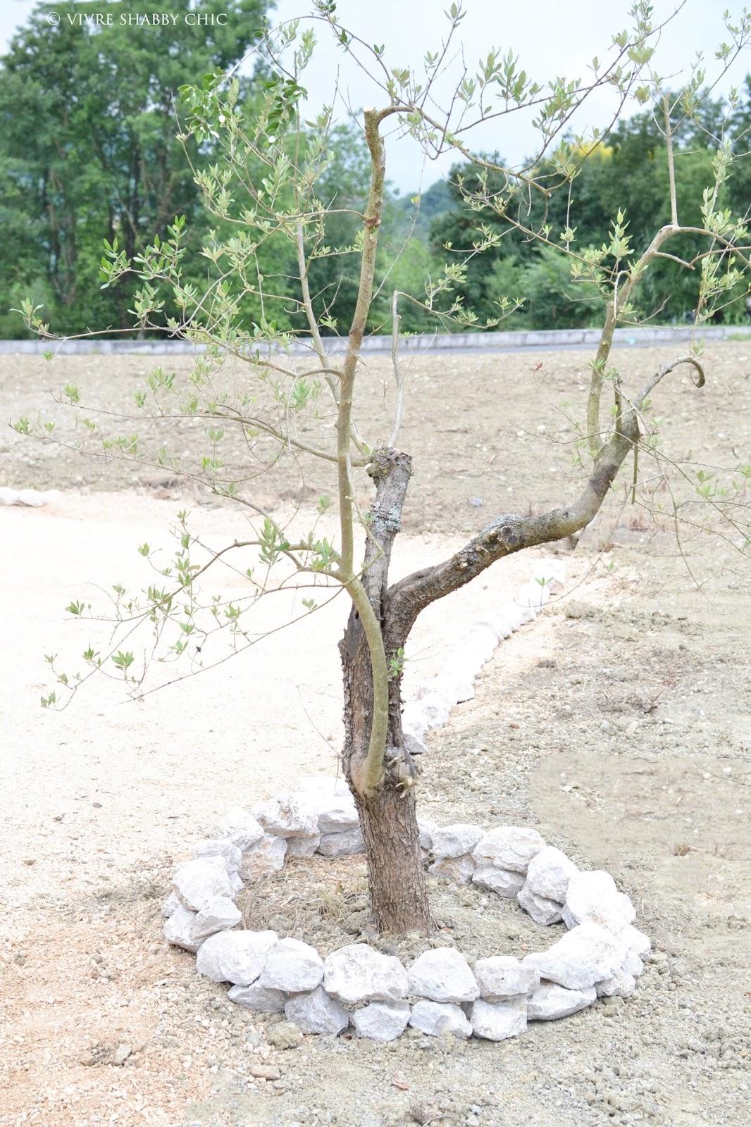 Vivre shabby chic progettare un giardino - Giardino con ulivo ...