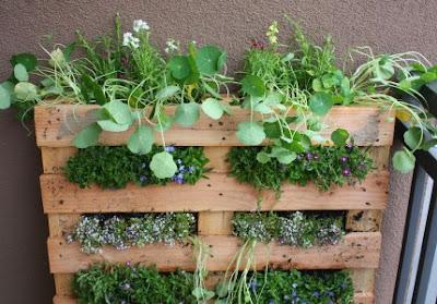a vertical herb garden from shelterness