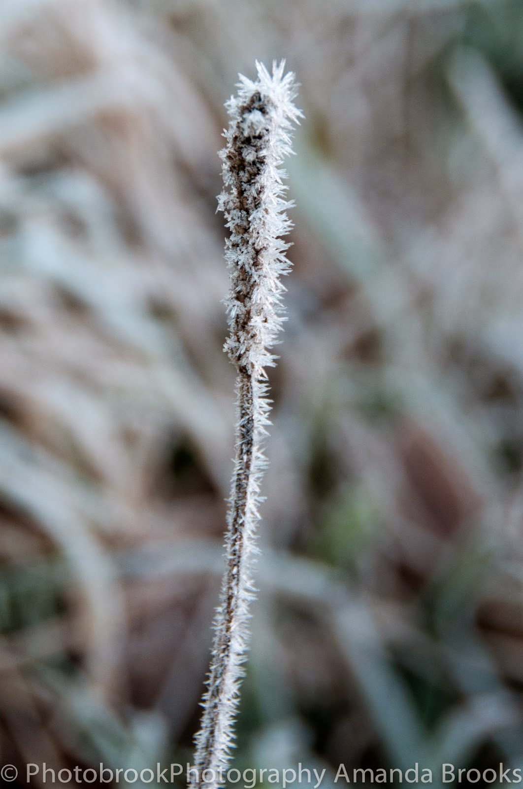 Heavy Frost on plants