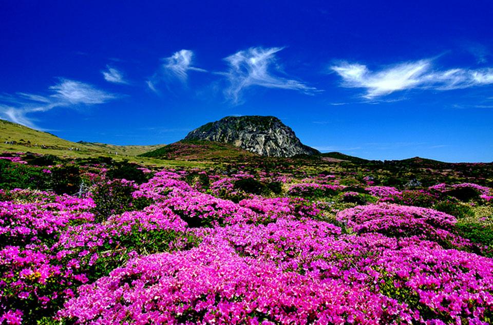 Beautiful Jeju Island In South Korea Korean Hawaii Most Beautiful Places In The World