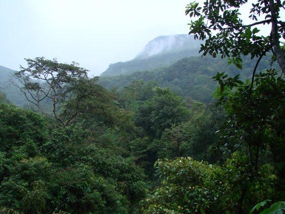 sripada forest