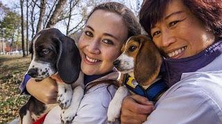 veterinaria online fecundacion in vitro en perros