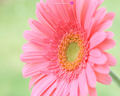 HD Flower Wallpaper Free: Flower Computer Wallpaper