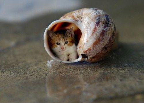 Gambar Kucing Lucu didalam cangkang