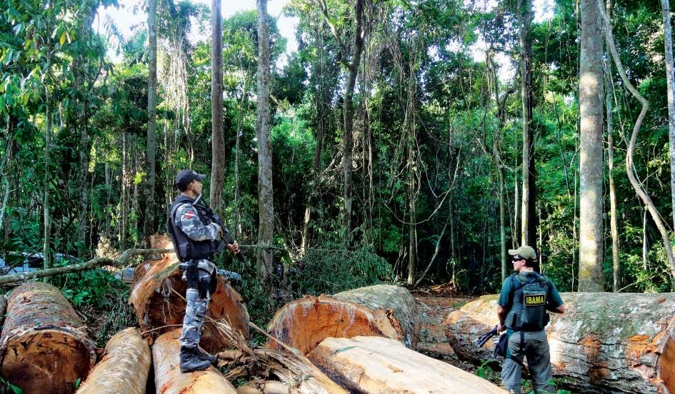 "Members of Brazil's environmental police force IBAMA and the Para state police inspect logs discovered during ""Operation Labareda,"" a raid against illegal logging, near Novo Progresso in the Amazon rain forest, August 18, 2012. After years of gains against destruction of the Amazon rainforest, Brazil appears to be suffering from an increase in deforestation as farmers, loggers, miners and builders move into previously untouched woodland, according to data compiled by the government and independent researchers. (Credit: Nelson Feitosa/Ibama/Reuters) Click to Enlarge."