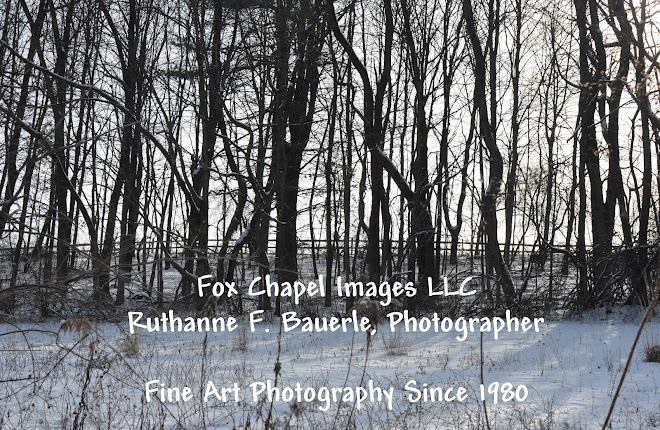Fox Chapel Images LLC  Ruthanne F. Bauerle Photographer