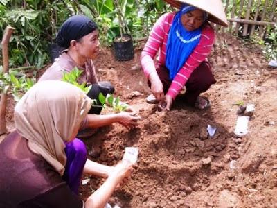 Cara Membuat Pakan Lele Organik dari Kotoran Sapi