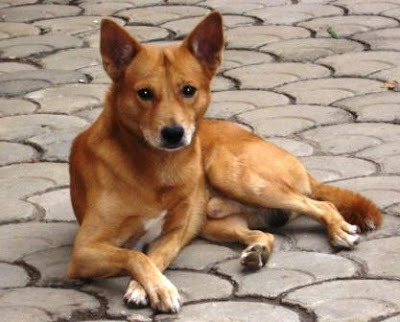 Dog Breeds Names With Pictures In India