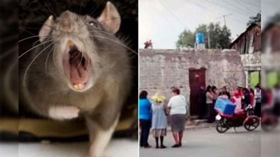 Ibu muda leka berparti, bayi maut dimakan tikus