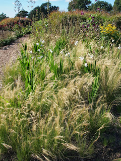 Sussex Prairies Garden. Amazing flowers and good example of garden design. Planting combinations