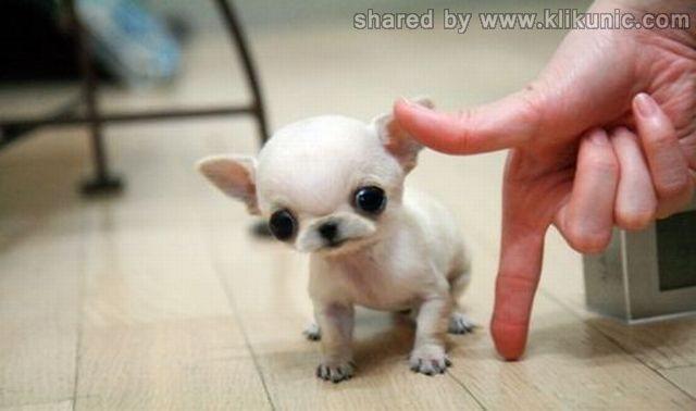 http://4.bp.blogspot.com/-UBLRNyrgzFw/TXhGjhC_UxI/AAAAAAAAQh4/viRe9QCLpEg/s1600/these_funny_animals_632_640_35.jpg