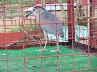 D'Leonor Hotel Inland Resort, Zoo, Davao City, Tourist Spot, Mindanao, Davao Delights, Davao Beaches and resorts