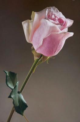 pinturas-de-rosas
