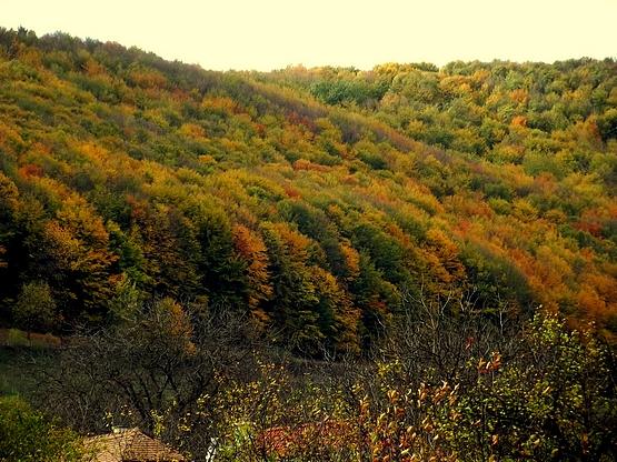 Őszi színekben