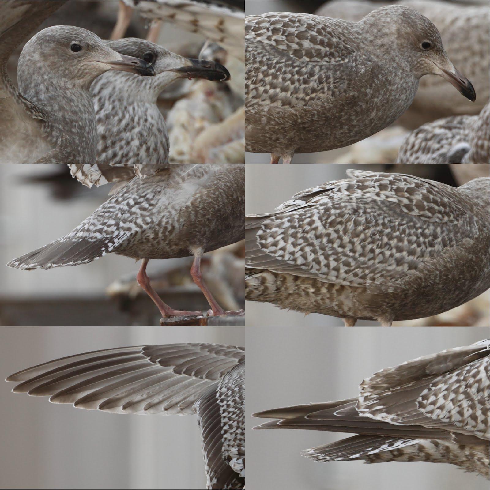 fugl som lever alene