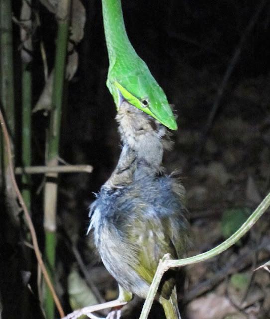 Wildlife photography Nicaragua