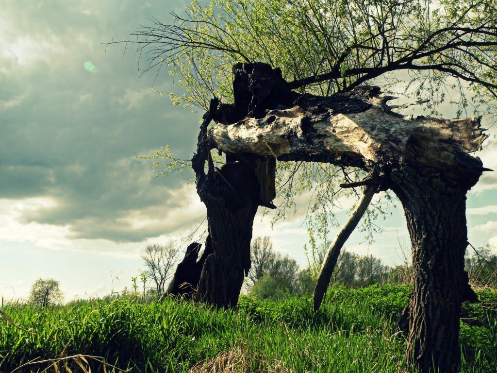 W wiejskiej kranie wśród zielska