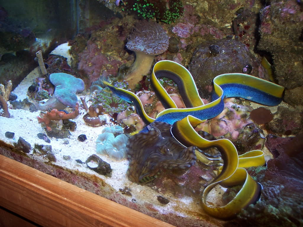 Summer tropical aquarium for Best fish for reef tank