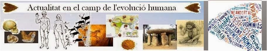 Homo & Evolució