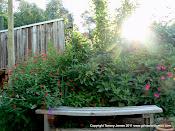 Summer in My Garden