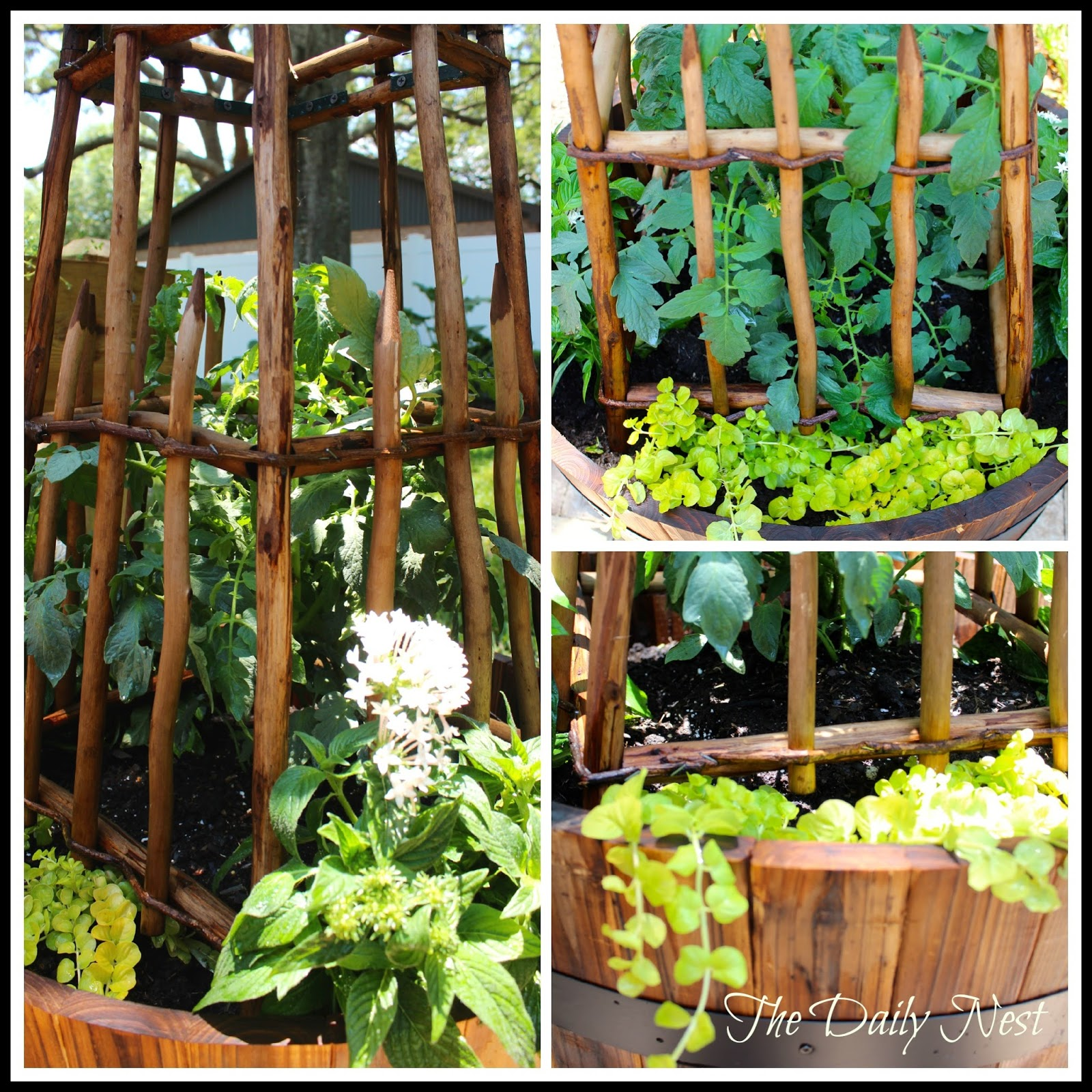 how to prepare a whiskey barrel for planting