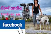 Covilandia, collares para mascotas. (Facebook)