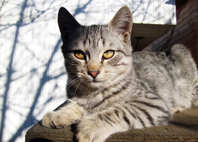 Серый кот на солнышке