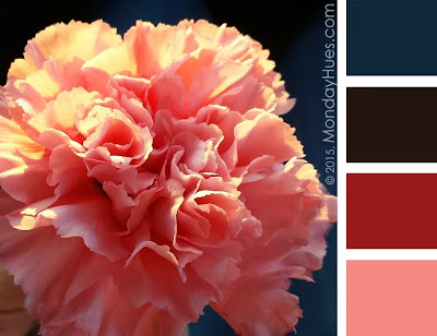 Monday Hues: Closeup of a Pink Carnation